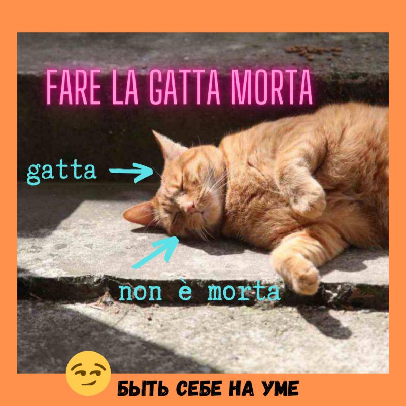 FARE LA GATTA MORTA